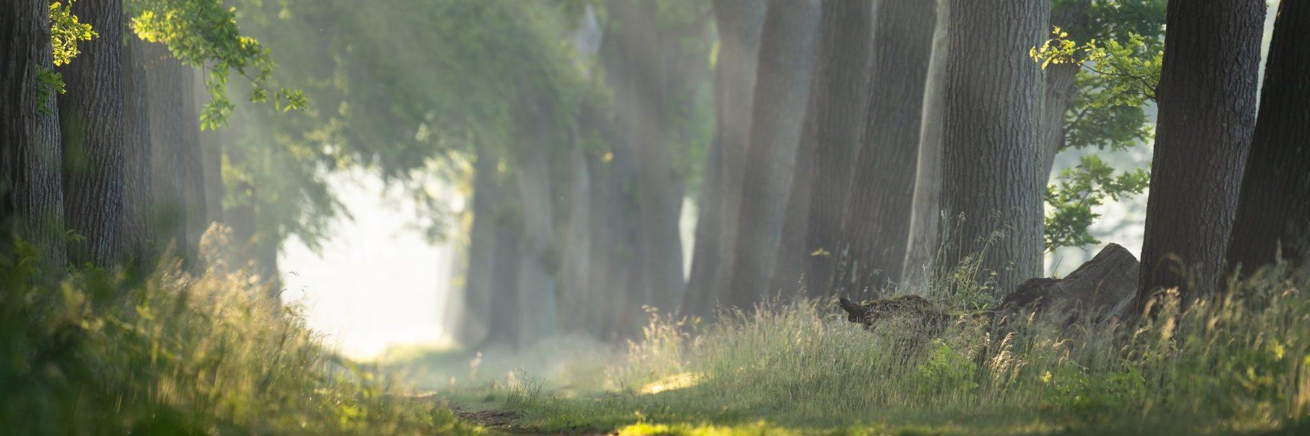 Door de bomen het licht zien